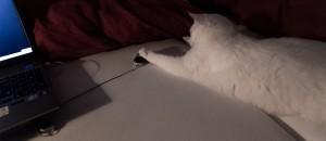 Ha, das ist ja wirklich eine Maus!