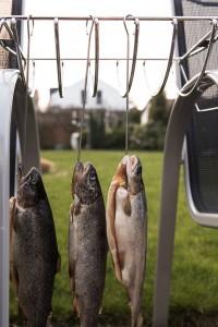 Immer darauf achten, dass die Forellen frei hängen und sich nicht berühren